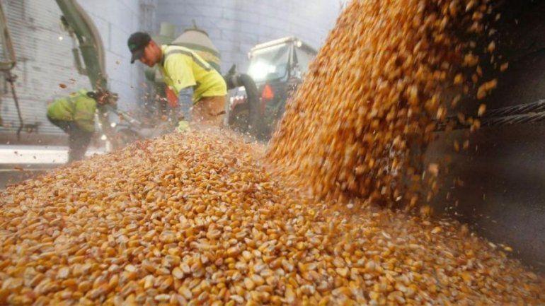 Exportaciones de maíz.
